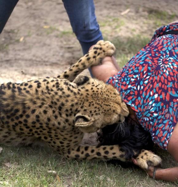 เสือชีตาห์ตะปบหญิง