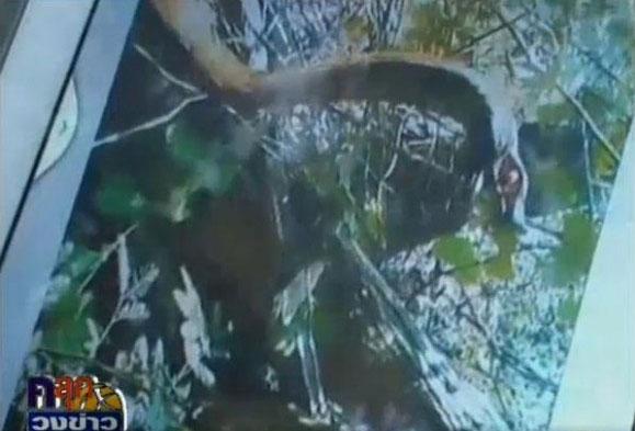 ภาพถ่ายติดพญานาค โผล่สระน้ำที่นครพนม