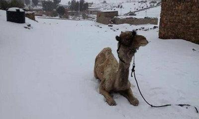 หิมะตกครั้งแรกที่อิยิปต์